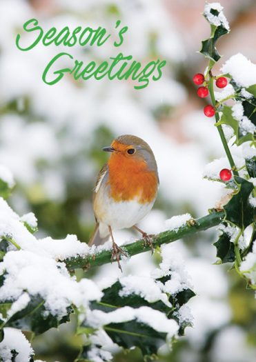 1643 - Sitting Pretty Branded Christmas Card